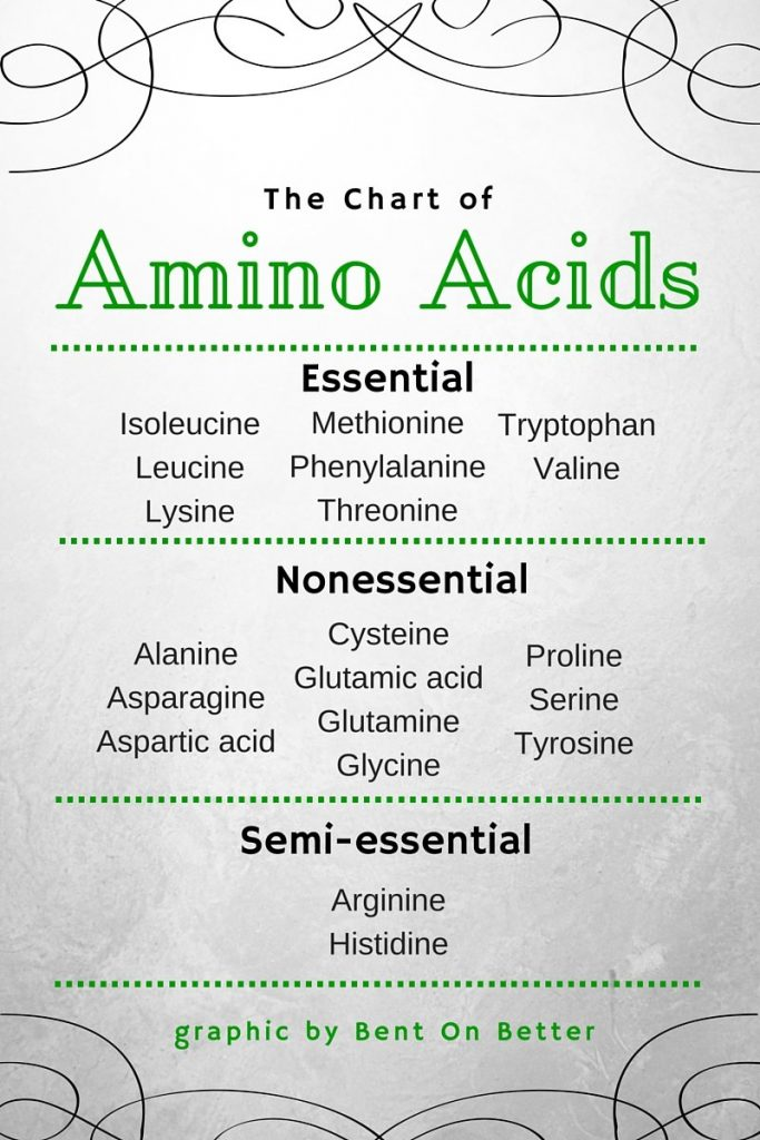 Why You Should Eat More Protein - Bent On Better - The Chart of Amino Acids